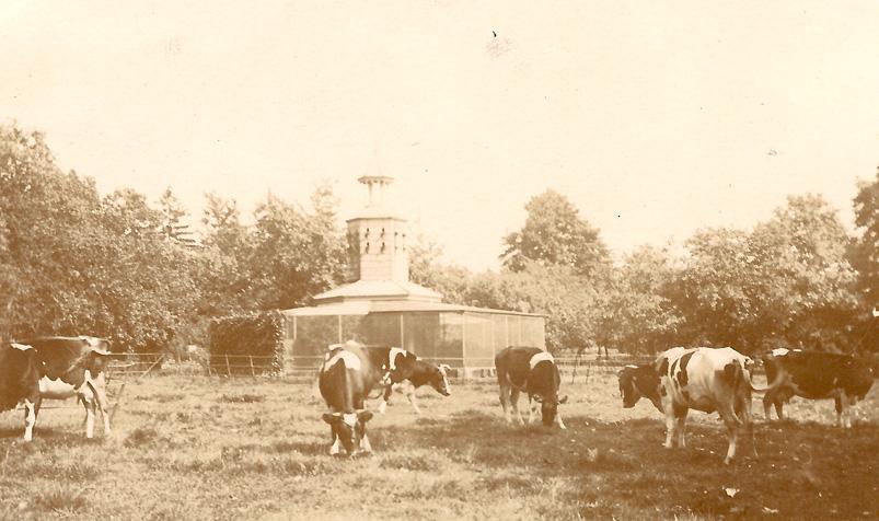 De volière en een deel van de weide t.b.v. het vee en de paarden.