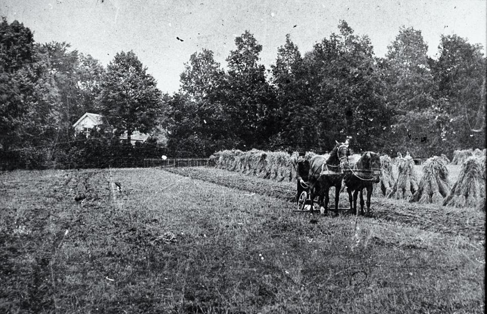 """Tegenover """"de Kastanjehof ligt het huis op nummer 197, gebouwd in 1850. Op deze foto ligt het aan het eind van de akke, achter bosschages. De boer met paard is Gerrit Hendrik van Veelen, koetsier en palfrenier bij de familie Wolterbeek (huis """"Valkenburg"""". Zelfs de naam van het paard is bekend: Stella."""